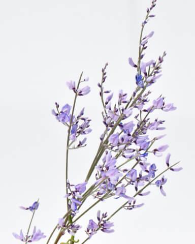 Lavendel-Öl sollten Sie immer im Reisegepäck haben.
