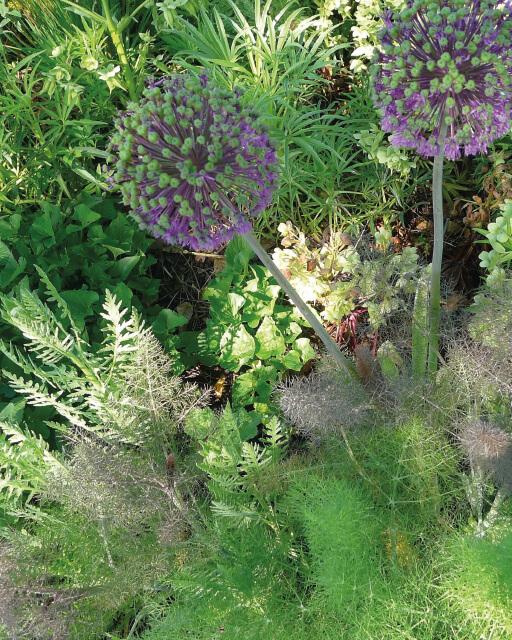 Gärtnern hat positive Effekte für die Seele und den Körper.
